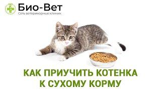 Как приучить котенка к сухому корму