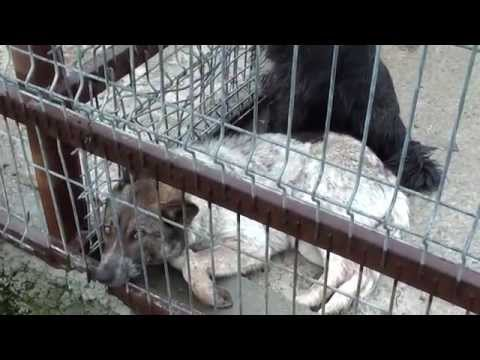 16 April 2014 Public Shelter Slatina Bad conditions - the dogs are agonizing