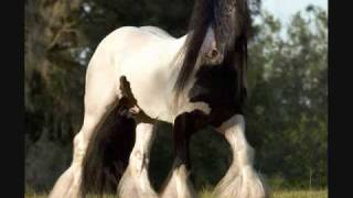 "The Most Beautiful Horses In The World ""Gypsy Vanners""!!!!"