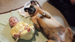CUTE Babies and Dogs Doing Funny Things - Funny Dog and Baby Videos Ever