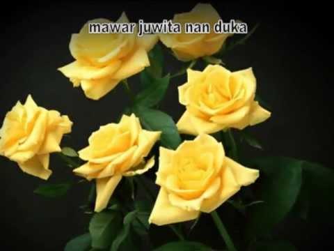 kisah mawar di malam hari - cover with lyric