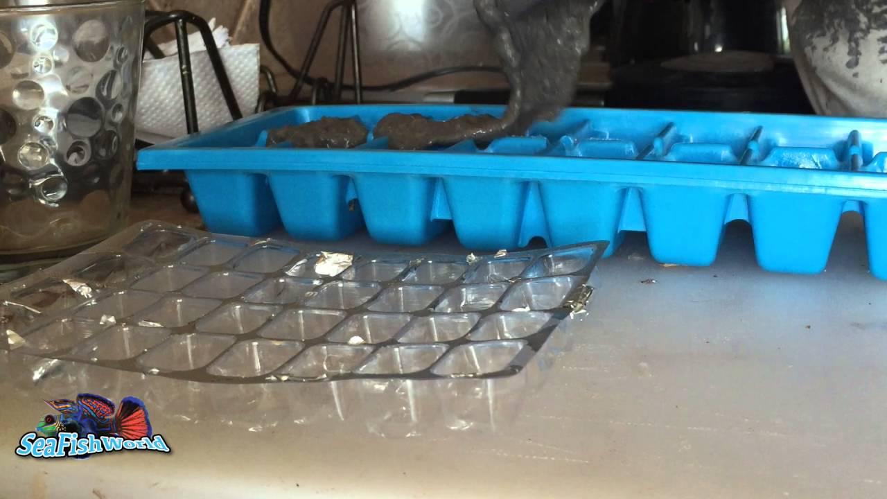 Preparando comida congelada para peces y corales youtube for Comida congelada para peces