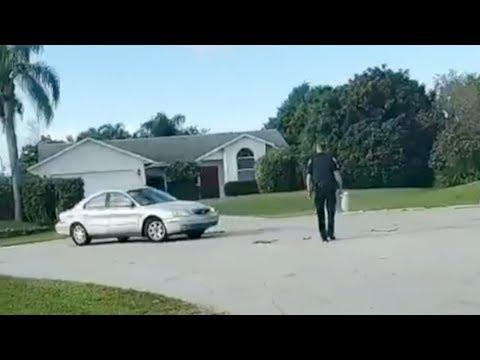 Florida Dog Drives Car Backwards for an Hour