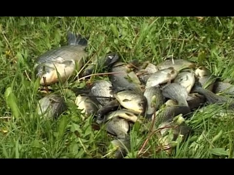 рыбалка на карася весной прикормка снасти