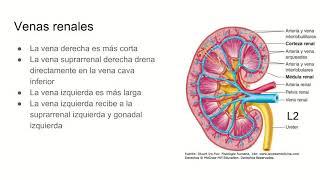 Cava urinario vena inferior del sistema