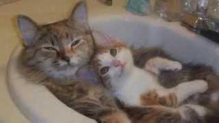 Кошки моются в ванной показ слайдов 2015!