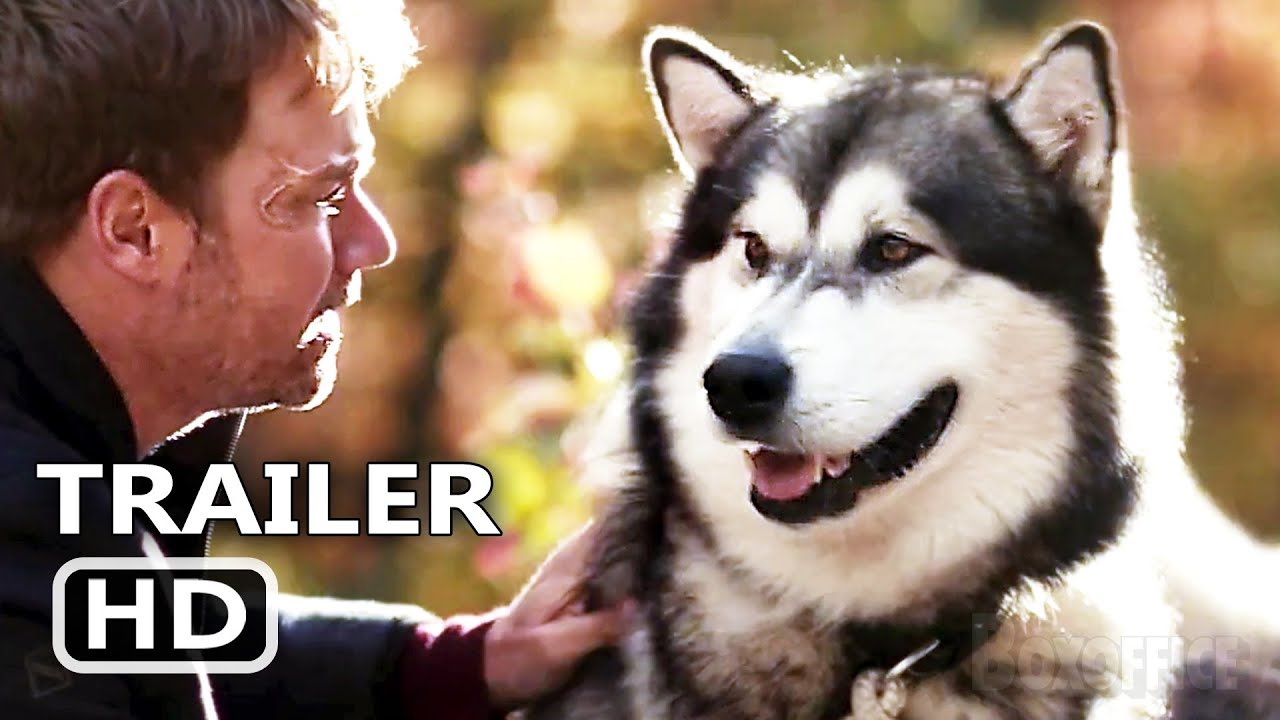 HERO DOG THE JOURNEY HOME Trailer (2021) Adventure Movie