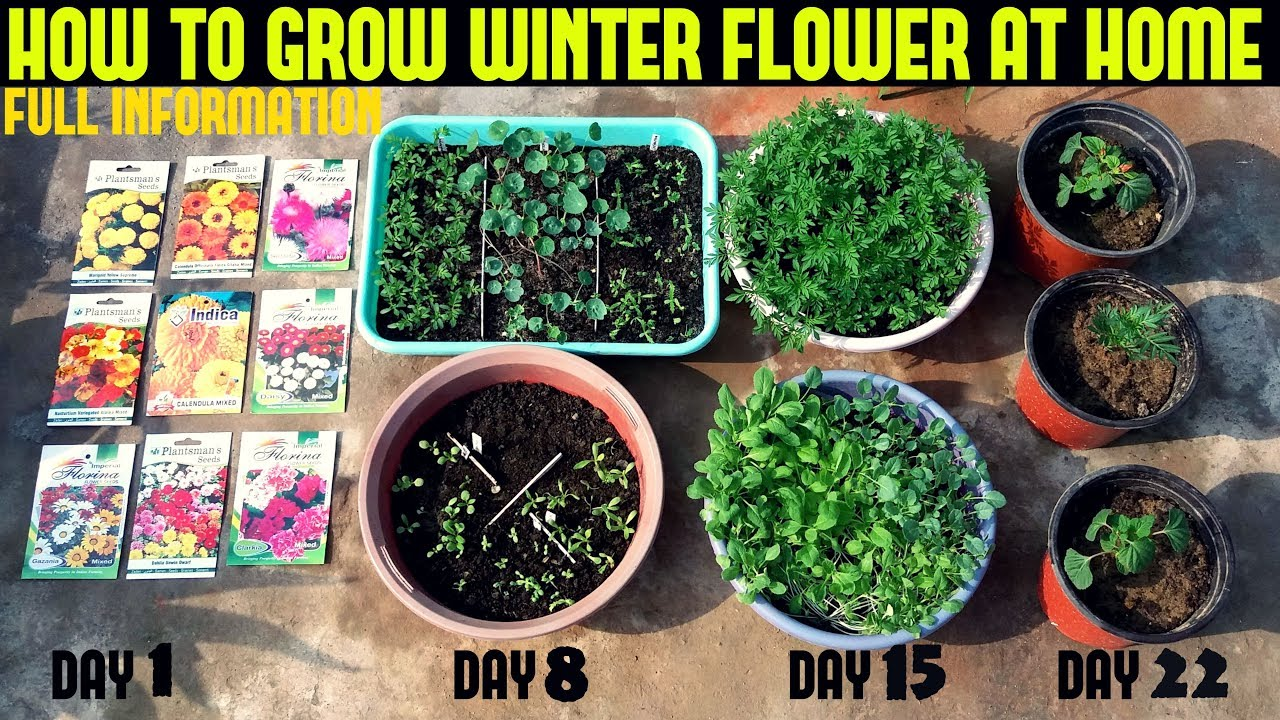 How To Grow Winter Flower Seeds Fast