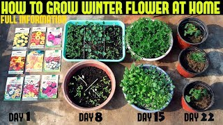 How To Grow Winter Flower Seeds Fast (With Full Updates)