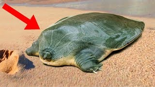 STRANGEST Animals You Won't Believe Are REAL!