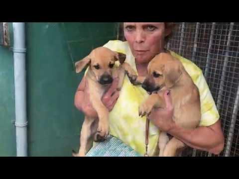 Aruban Cunucu Dog Rescue Documentary