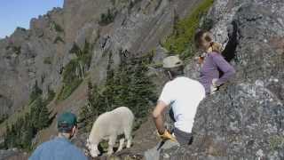Hiking Safely With Goats