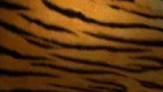 Tiger Stripes - Sthlm Hustle