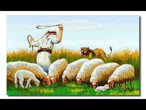 APLM 229 आप भेड़ हैं या शेर--डॉ आनंद प्रदीक्षित #LIFE MANAGEMENT