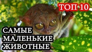 Топ 10 Самые маленькие животные в мире!