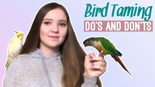 What NOT to Do When Training a Scared Bird and What to Do Instead! | How to Tame a Parrot