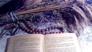 видео Сенна / Кассия остролистная Cassia acutifolia