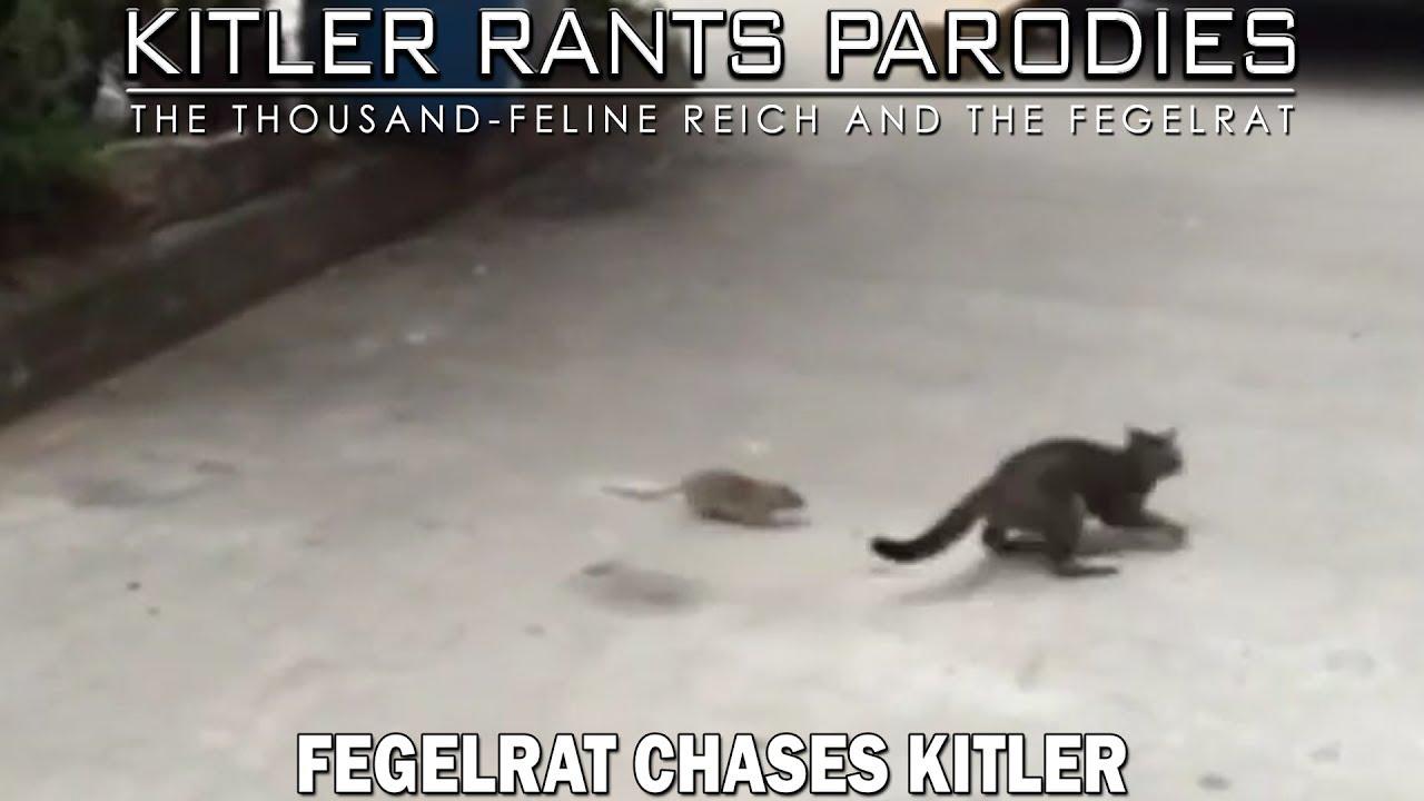 Fegelrat chases Kitler