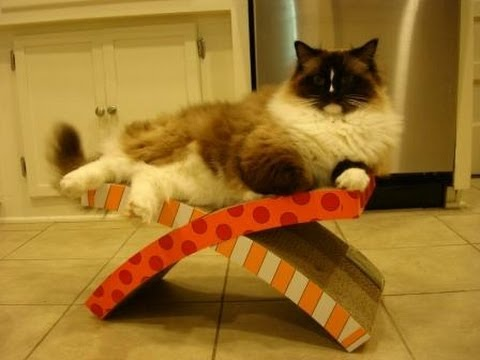 petstages easy life hammock and scratcher                              floppycats petstages easy life hammock and scratcher                                 rh   youtube