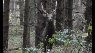 E129 Hunting Sika In The Czech Republic (Sikahirschjagd), Season 1, with Jerrold Scharninghausen