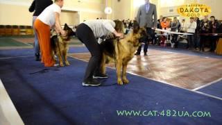 Выставка собак, Харьков, 30 октября 2016, видео 9