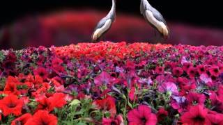 Song of Your Heart by Snatam Kaur and Peter Kater