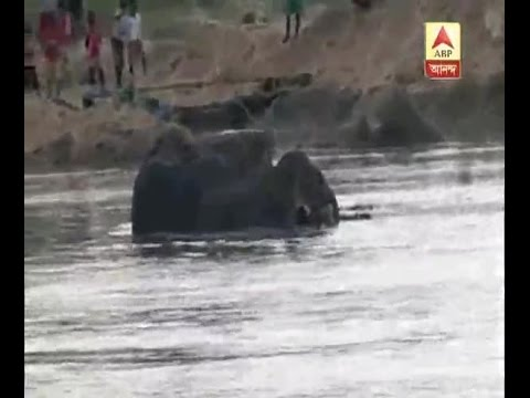 6 elephants stranded in river Damodar at Bankura