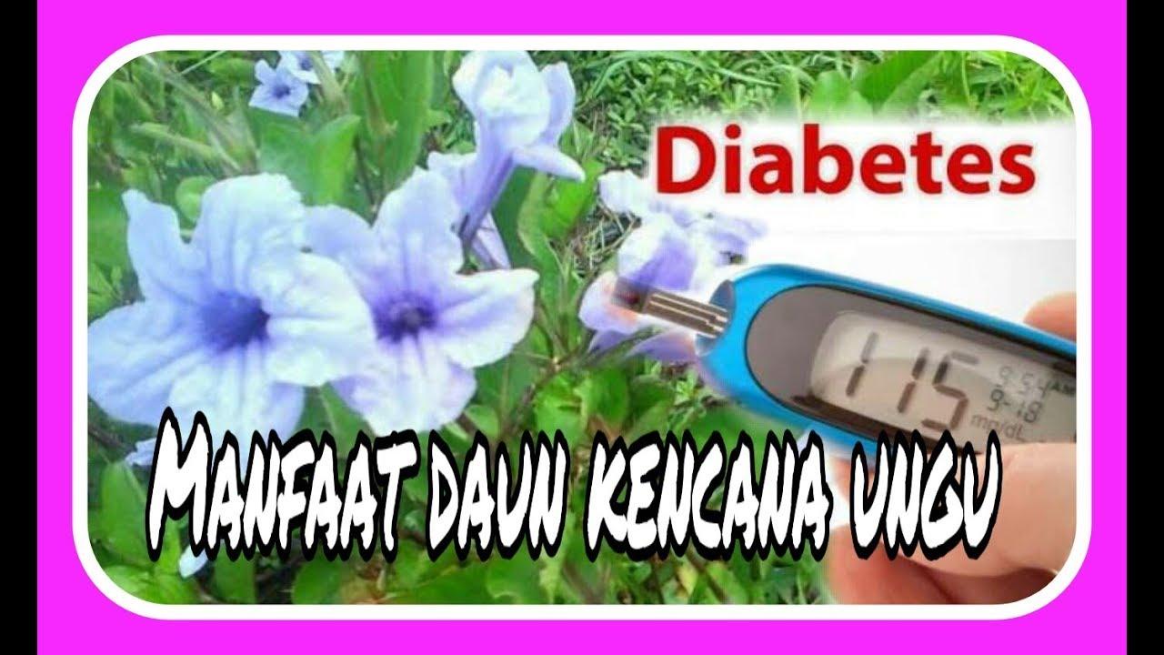 daun wungu obat diabetes dari