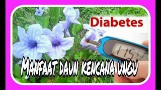 Download lagu Khasiat Daun Kencana Ungu sembuhkan Diabetes