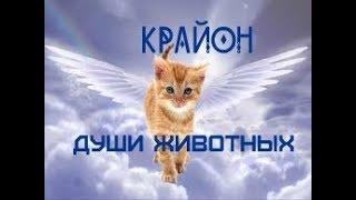 КРАЙОН. Души ваших животных!