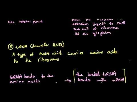 4.2 DNA: Production of Polypeptides - Transcription and Translation - Blueprint of Life HSC Biology