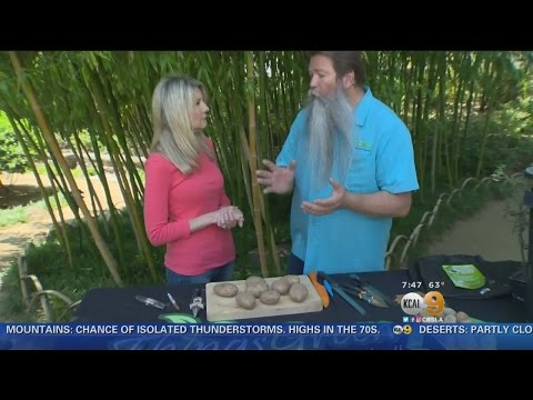 In The Garden With Nick Federoff: Growing Your Own Potatoes