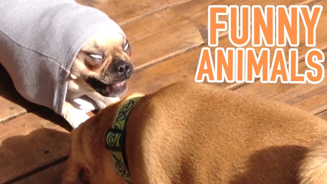 Funny Montage | Cute And Funny Cats, Dogs And Pets! | Amazing Animal Montage #7