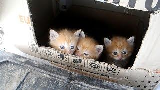 Откуда берутся рыжие котята