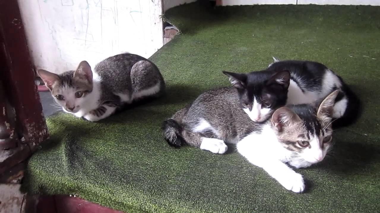 3 Ekor Anak Kucing Yang Lucu Youtube