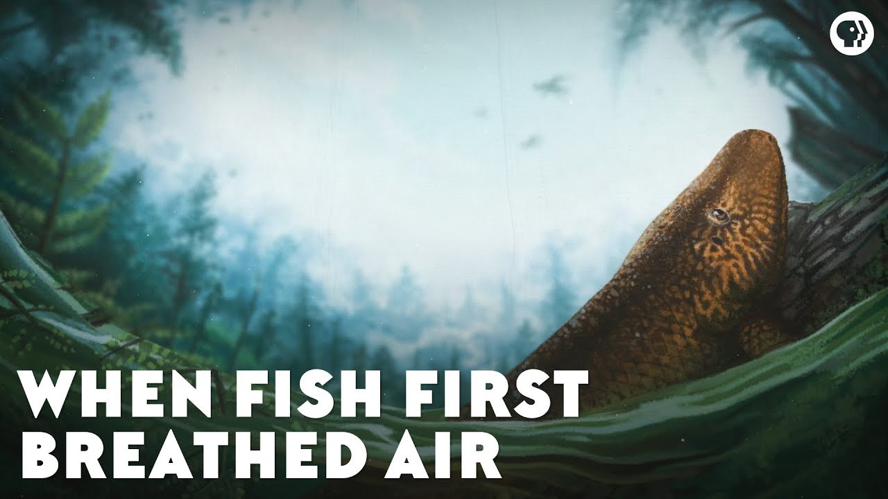 when-fish-first-breathed-air