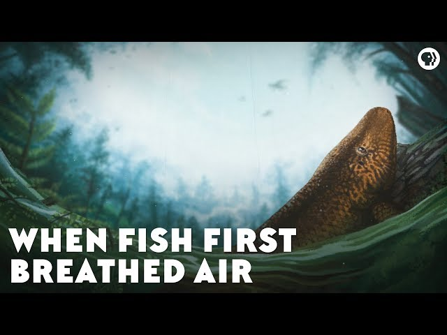 When Fish First Breathed Air