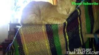 Кот Кеша - Любимая поза кота / funny cats