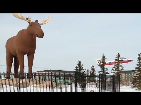 Canada, Norway reach truce over the world's tallest moose