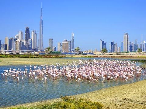 Flamingos in Ras Al Khor Dubai
