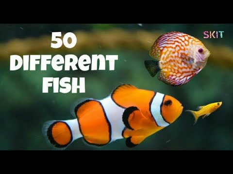 50 Different Fish Name # Beautiful # Types Of Fish