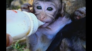 WOW! Nice Day! Poor baby Monkey Surprise! Sherri and Lori Very thin Get Special Milk.