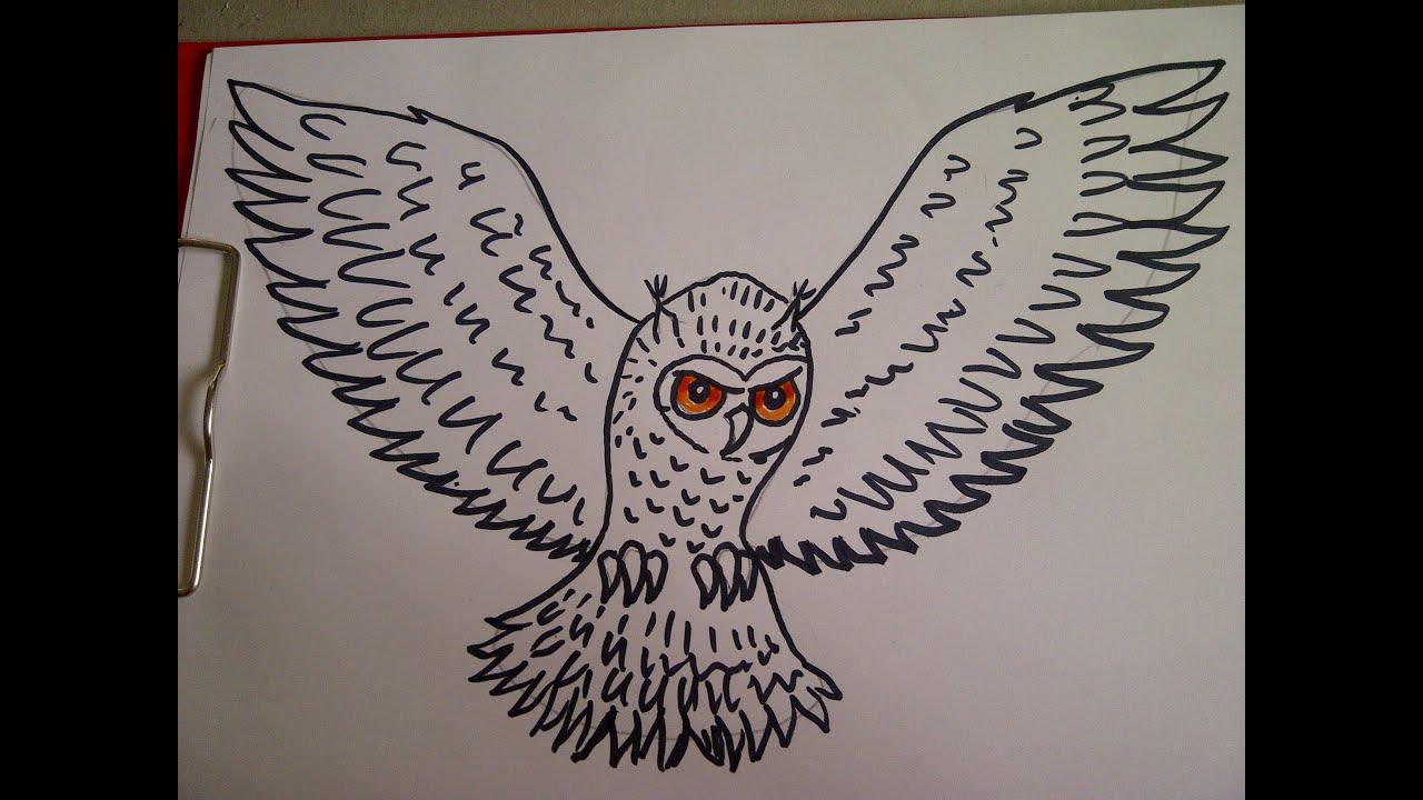 Como dibujar un buho Como hacer un dibujo para principiantes