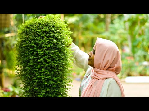 Fast Growing Hanging Plants/ Beautiful Cascading Plants In Malayalam / Botanical Woman