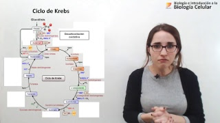 Biología Celular: Glucólisis y Ciclo de Krebs (10/10/2018)