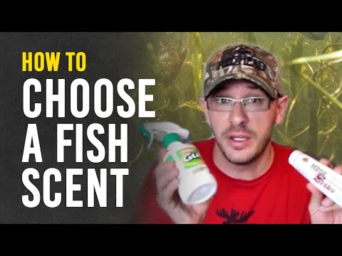 Learn More About Fish Scents and Attractants