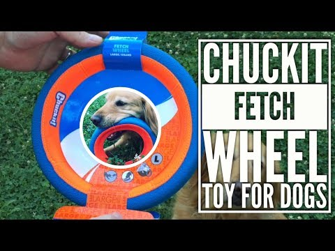 chuckit-fetch-wheel-toy-for-dogs-with-abbey-golden-retriever