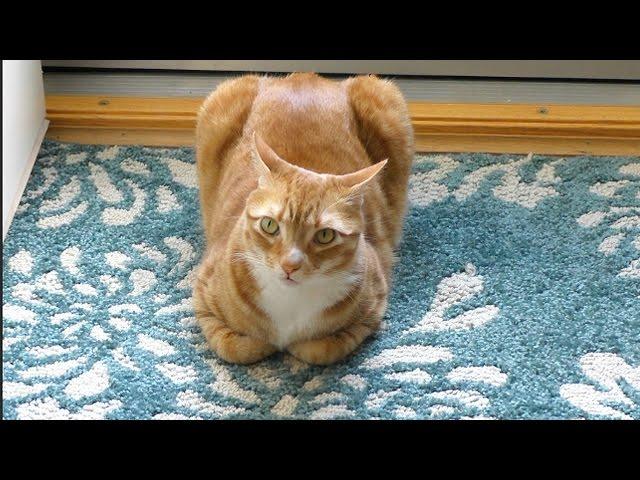 When Cats Look Like Bread