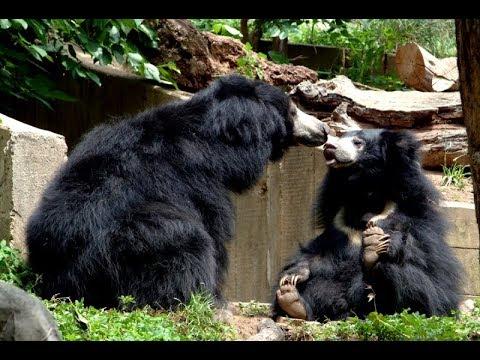 Ratanmahal Sloth Bear Sanctuary | Jaldhara Waterfall , Dahod