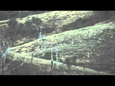 Rusa Deer Stag